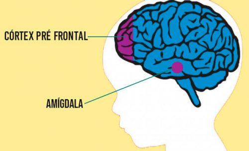 cortex-pre-frontal-e-amigdala.jpg
